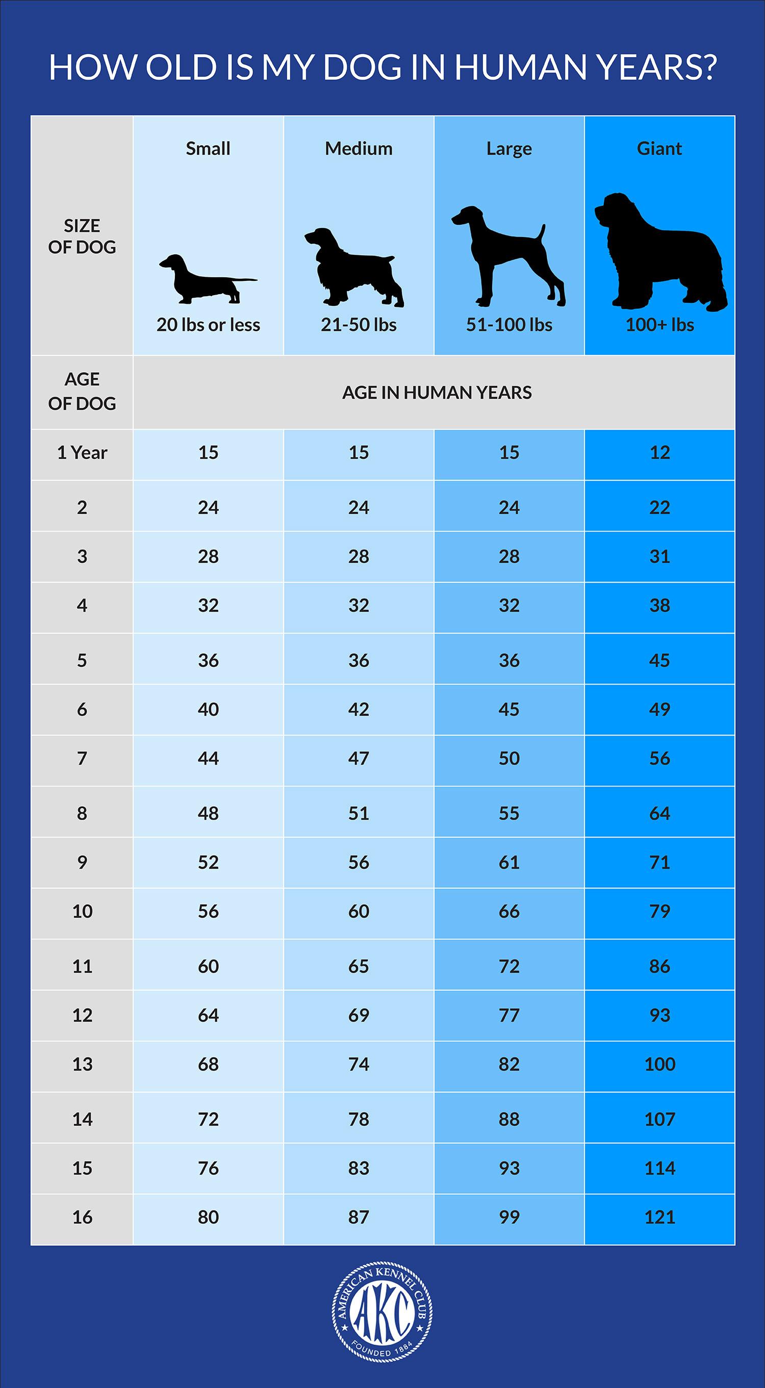 Dog_Age_Chart_Proof_01Blue.jpg