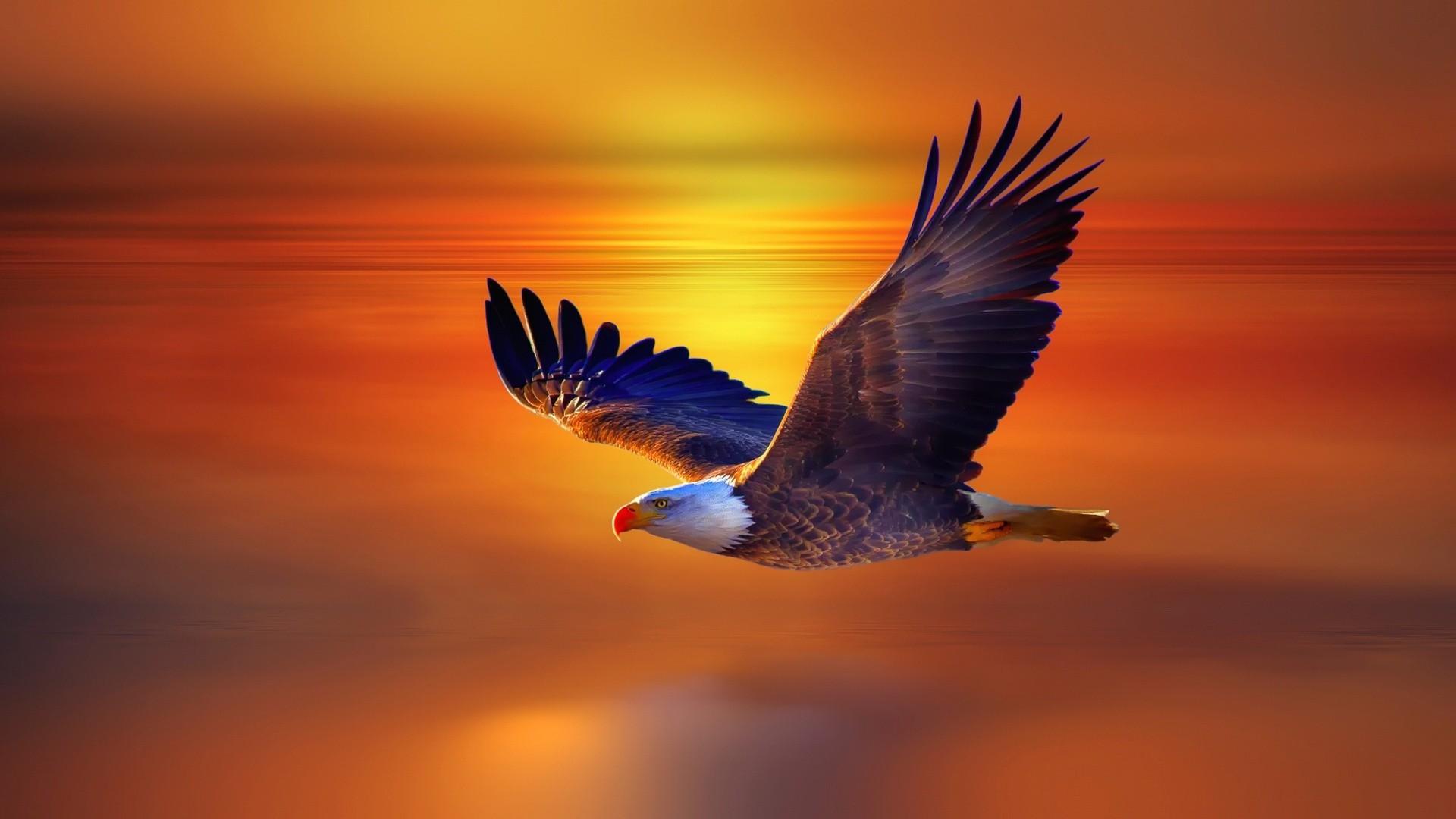 독수리 1.png