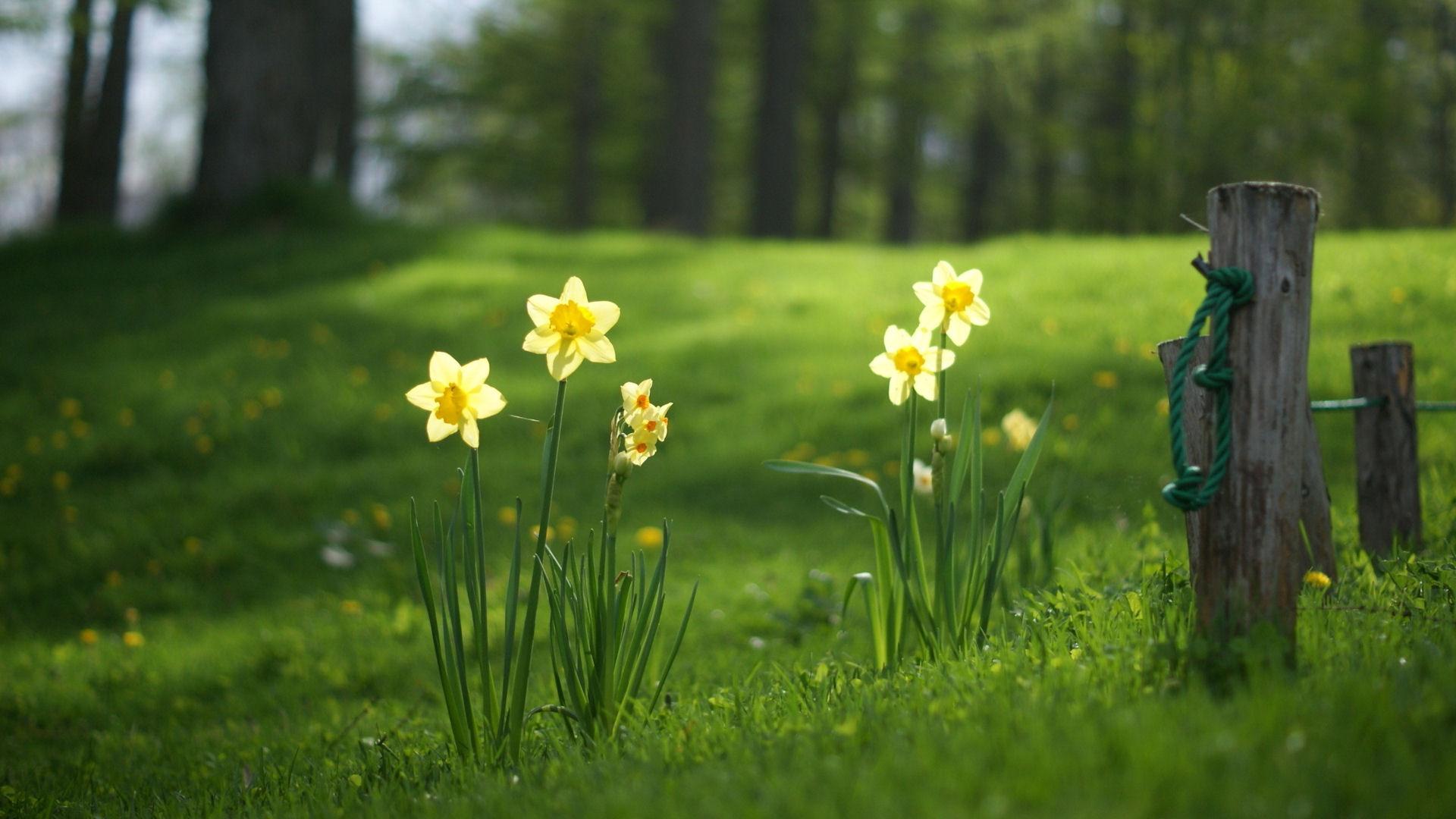 flowers_grass_1920x1080.jpg