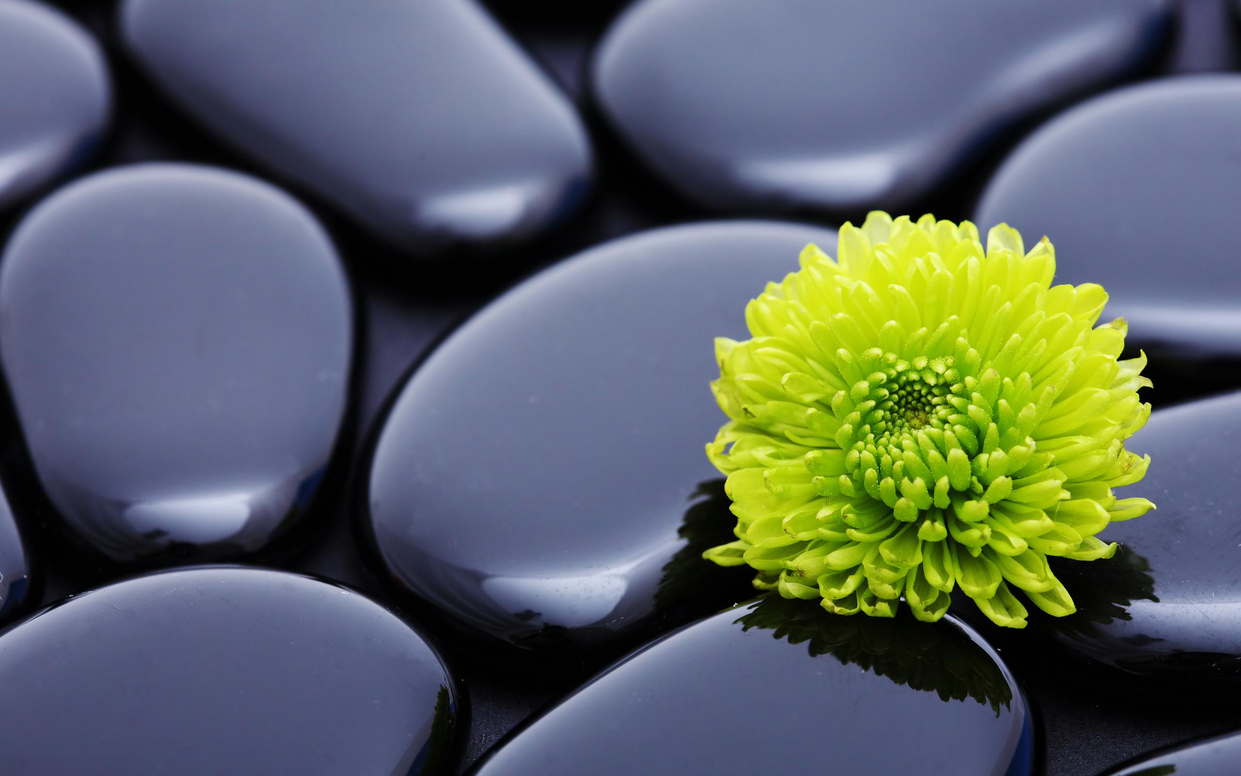 Flowers_stones_zen_2560x1600.jpg