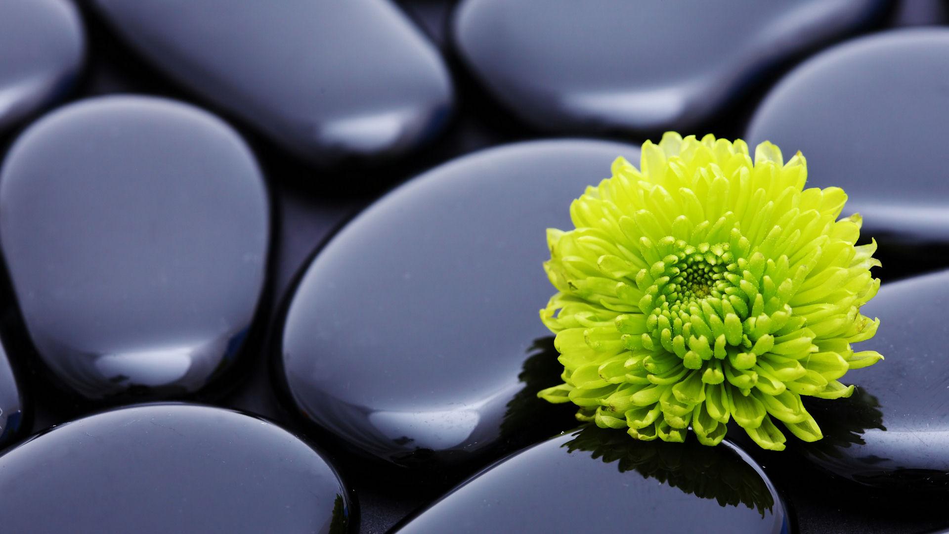 Flowers_stones_zen_1920x1080.jpg