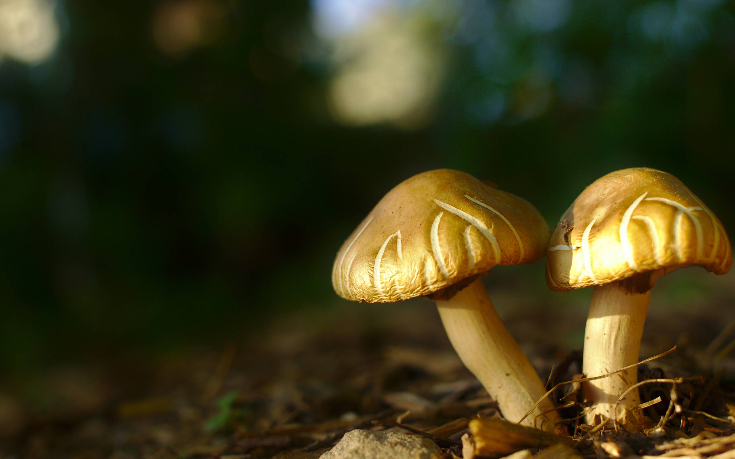 Backyard_Mushrooms_by_Kurt_Zitzelman.jpg