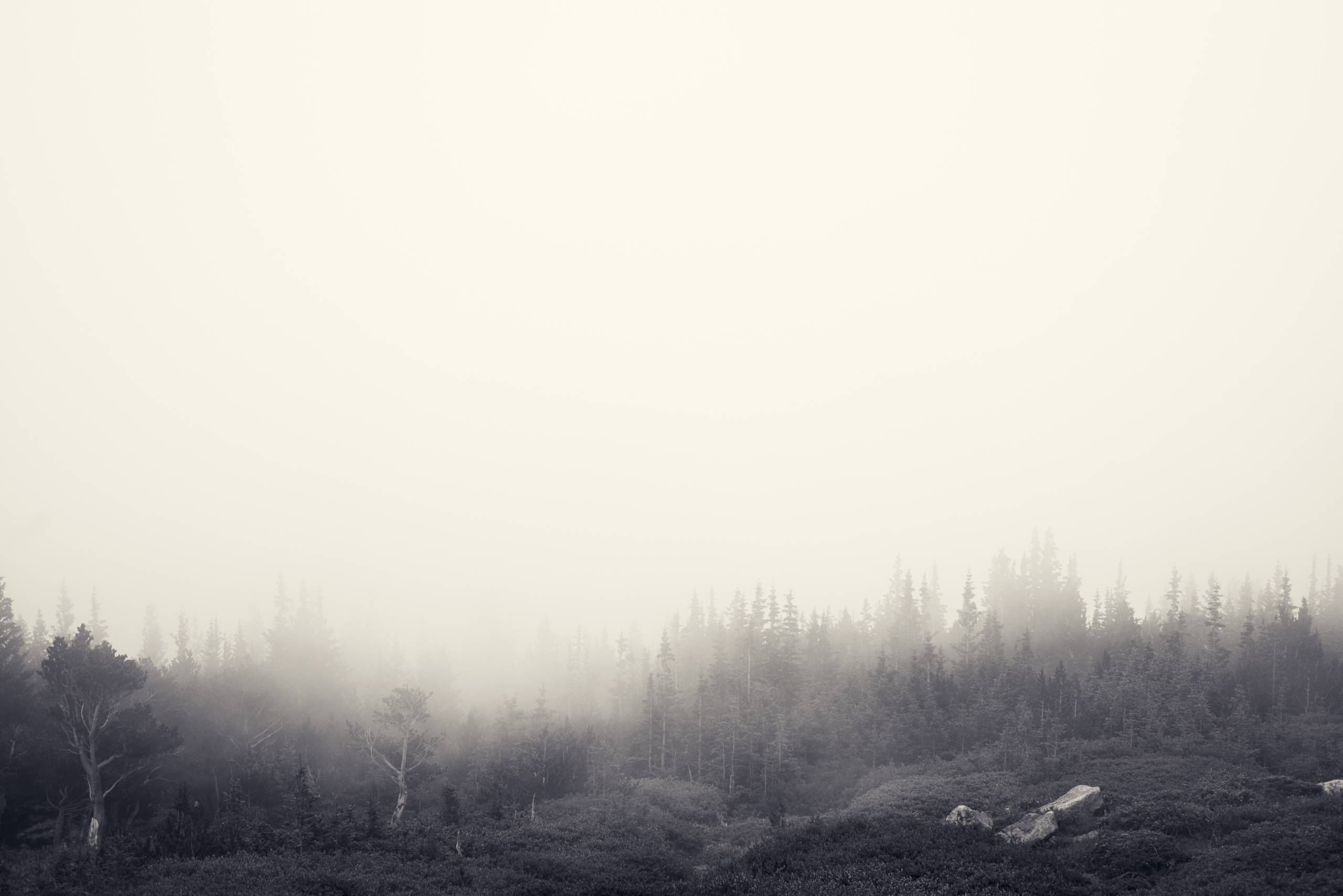 Foggy_Forest_by_Jake_Stewart.jpg